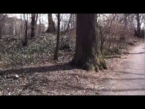 №37 Prospect park и домик охотника в США Brooklyn, NY 2013
