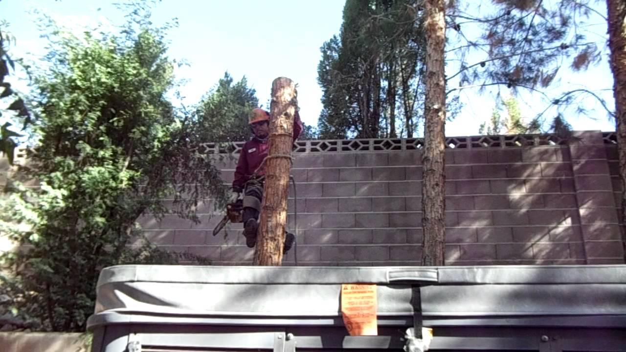 tree removal in Las  vegas