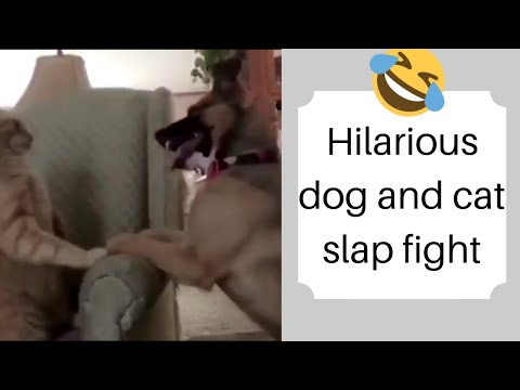 Hilarious sound effects for dog vs cat Slapfight from iMovie make