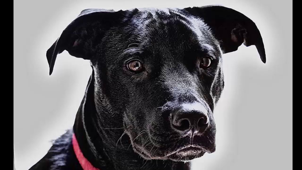Qu significa so ar con un perro blanco o negro youtube - Bruguer colores para sonar ...