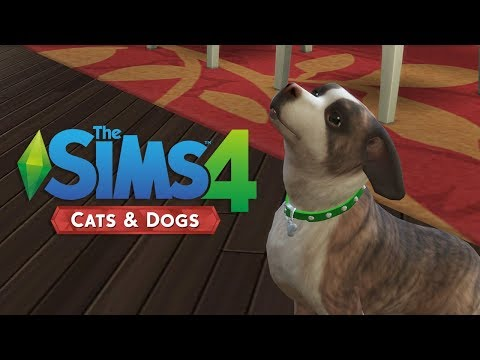Updating Simsie Save for The Sims 4: Cats & Dogs (Streamed 11/14/17)