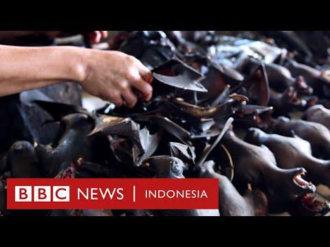 Virus corona: Kenapa kelelawar dituding jadi penyebar Covid-19? - BBC News Indonesia