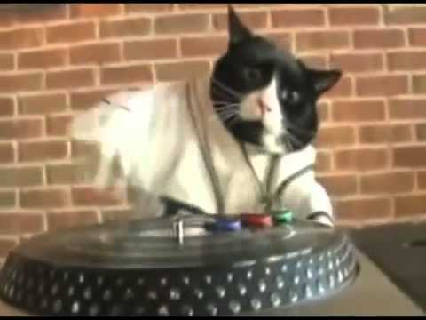 meet the dubstep cat 1