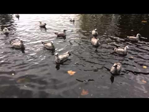 Dani Feeding The Ducks / Seagulls!