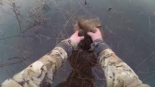 Охота с подсадной уткой на селезня (видеоряд)