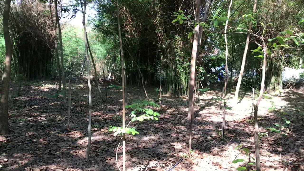 สงกรานต์ 64 พาชมสวนผู้พัน อู่ทอง แปลงไม้ป่าเศรษฐกิจ1