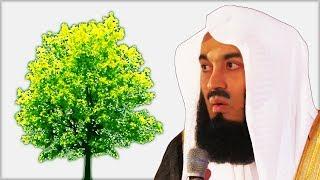 Дерево научило Шейха жить | Муфтий Менк