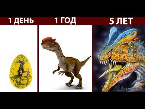 Наш динозавр РАСТЕТ ! ( The Isle )