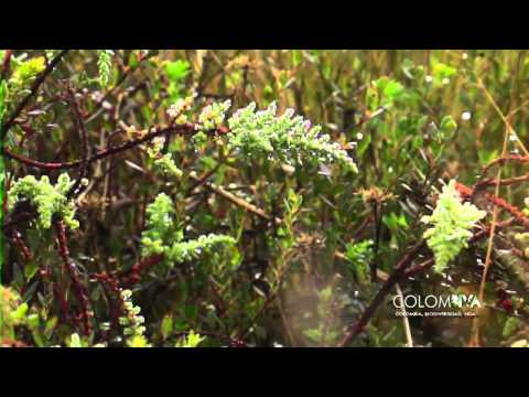 Páramos - Colombiva Emisión del 31 de agosto de 2014