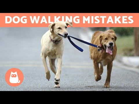 Pet Corner - 10 Common Mistakes When Walking Your Dog