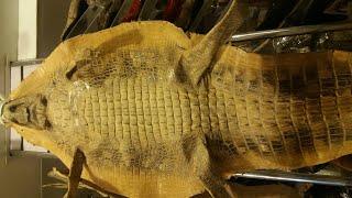 Египет. Магазин натуральных изделий из кожи. Ценник радует(, 2016-08-06T19:51:23.000Z)