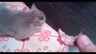 Разбудить Кошку колбасой