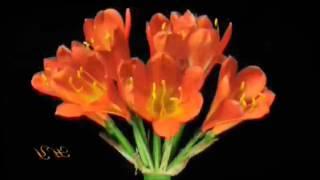 رقص الزهور