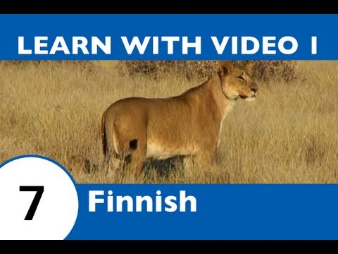 Learn Finnish with Video - This Finnish Lesson Proves That Curiosity Doesn't Always Kill the Cat!