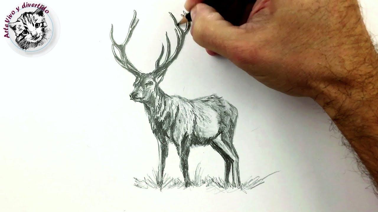 Como Dibujar Un Ciervo A Lapiz Dibujos Faciles Youtube