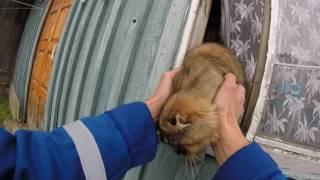 Спасение кота