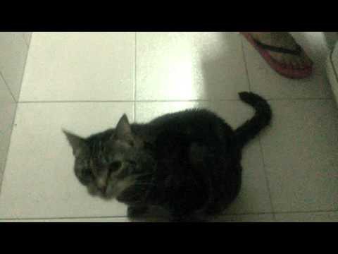 I want ham!   Daily Lia Cat