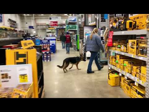 Dog Training in Sign Language only w/ GSD pup, Ruede- Before/After Two Week Board and Train