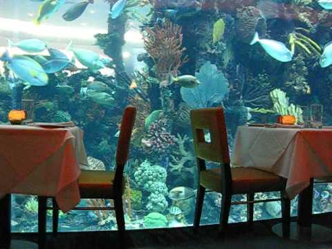 Relaxing...Chart House Restaurant Aquarium @ Golden Nugget Las Vegas