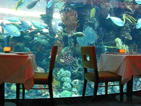 Relaxing Chart House Restaurant Aquarium Golden Nugget