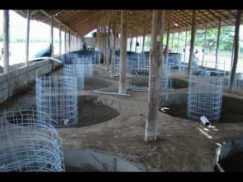 Tanques de geomembrana de polietileno en republica for Criadero de cachamas en tanques
