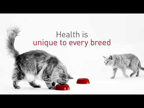 Cat Breed Nutrition: Health is unique to every breed