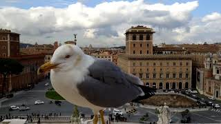 ヴェネツィア広場(ローマ)