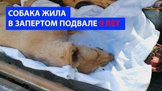 Собака жила в запертом подвале 9 лет.