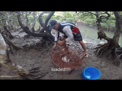 mudcrabbing nq