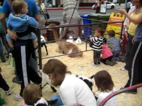 Petting Zoo-Santa Monica Farmer's Market