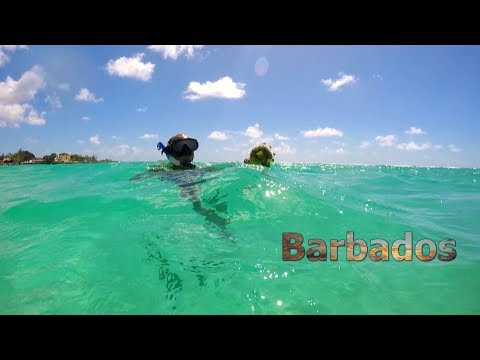 7 Days In Barbados