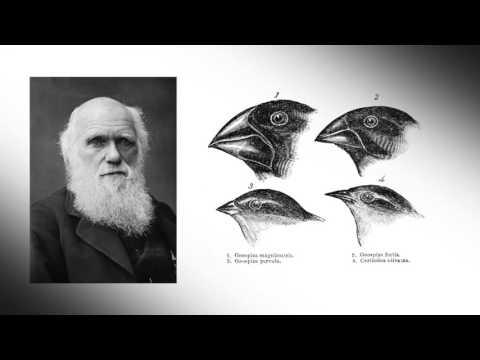 Richard´s Fun Facts - Darwins Finches