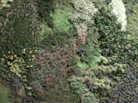 Vertical Garden in Madrid