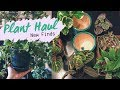 Plant Haul | Home Depot and Walmart Finds