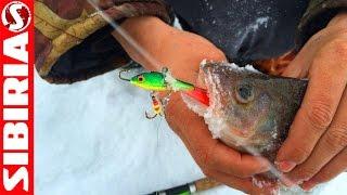 Самый уловистый БАЛАНСИР #3  Российские балансиры МЕРКУРИ обзор приманок для зимней рыбалки