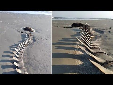 Esqueleto gigante desaparece misteriosamente de praia no litoral de SP