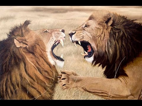 lion fight, lion fight to death, lion fight to death 2014, Full Length Wildlife Documentary