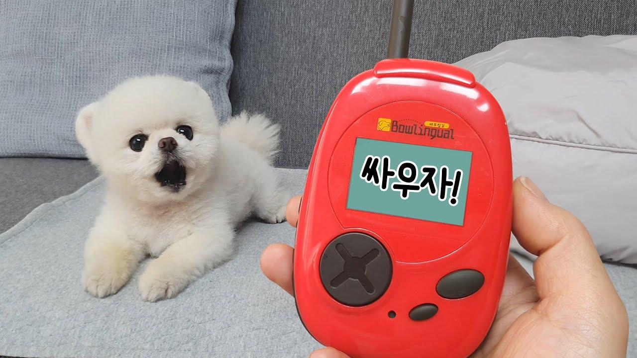 너 견성 문제 있어? 강아지 번역기를 사용해봤어요