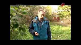 Усадьба  Огородные вредители  Грызуны 2013