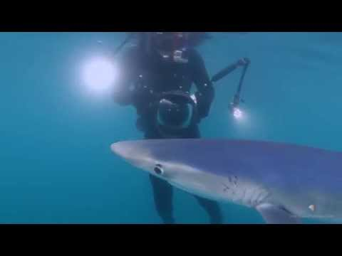 Sharky California - Shark Diving with SD Expeditions in San Diego