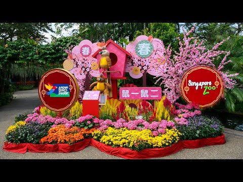 Singapore Zoo / Jurong Bird Park  ~ Chinese New Year