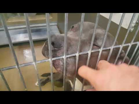 GIRLY: San Diego North Shelter, Carlsbad, CA - ID#: A1802698 / Tag#: N283