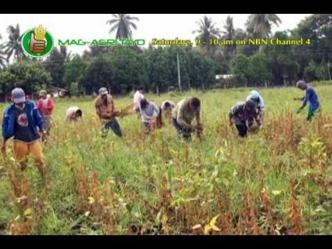 DA-BAR: Organic Soybean Development Program; Good Agricultural Practices in Soybean Production