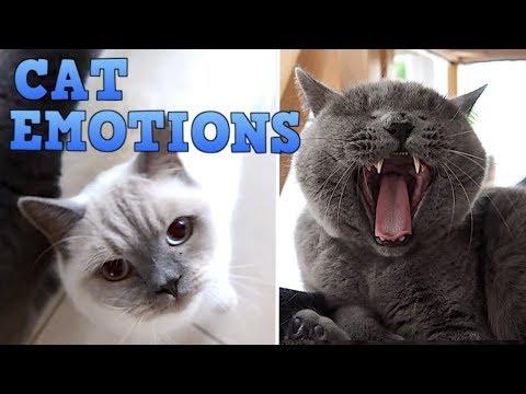 UNDERSTANDING A CAT'S EMOTIONS!  CHRIS & EVE