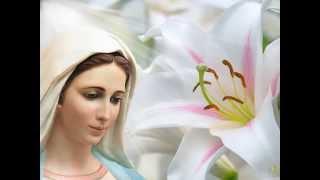 Розарий Матери Марии №7. Читаем вместе.
