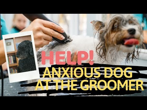 Dog Grooming Anxiety: Holistic Remedies