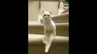 Смешные коты отказываются вести себя как животные