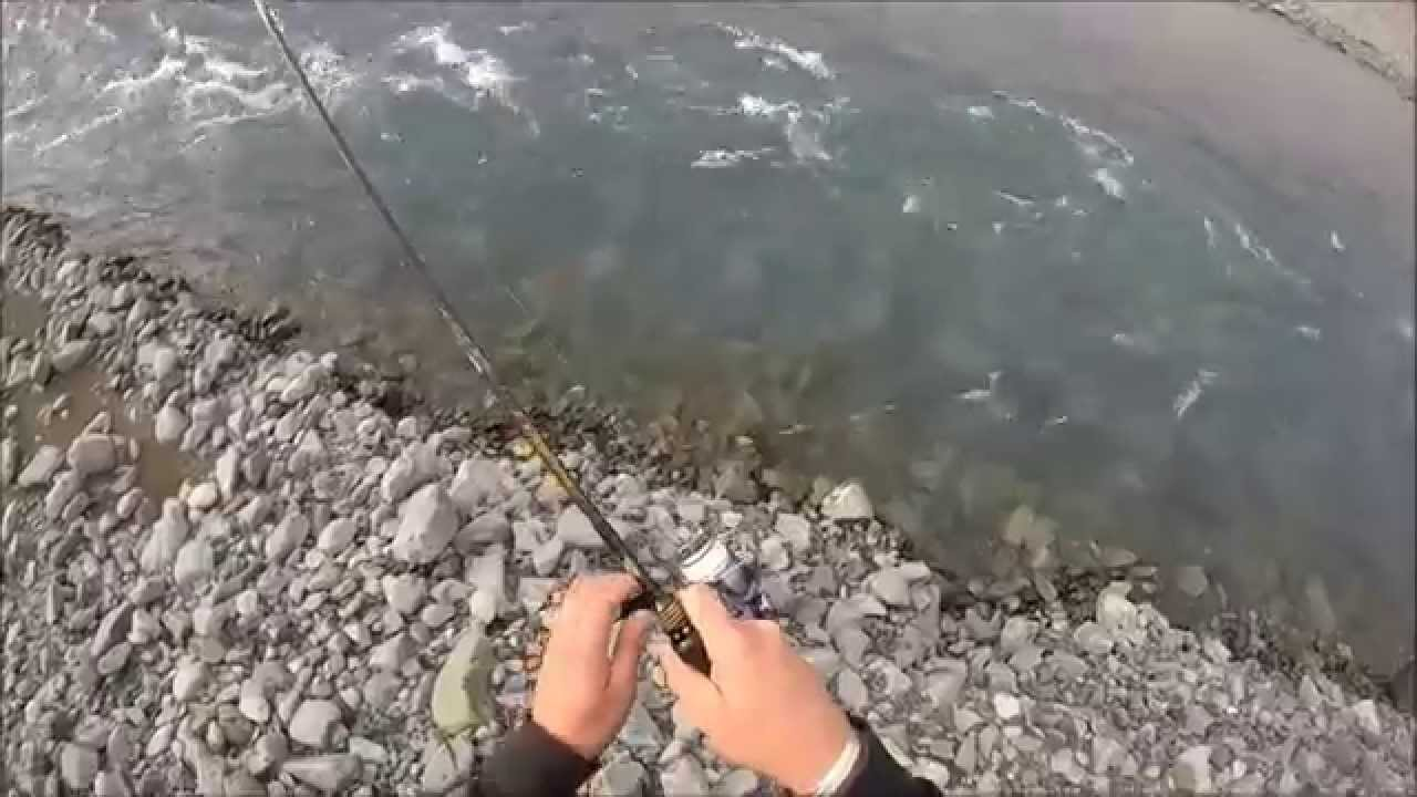 spin fishing for rainbow trout new zealand - youtube, Fly Fishing Bait