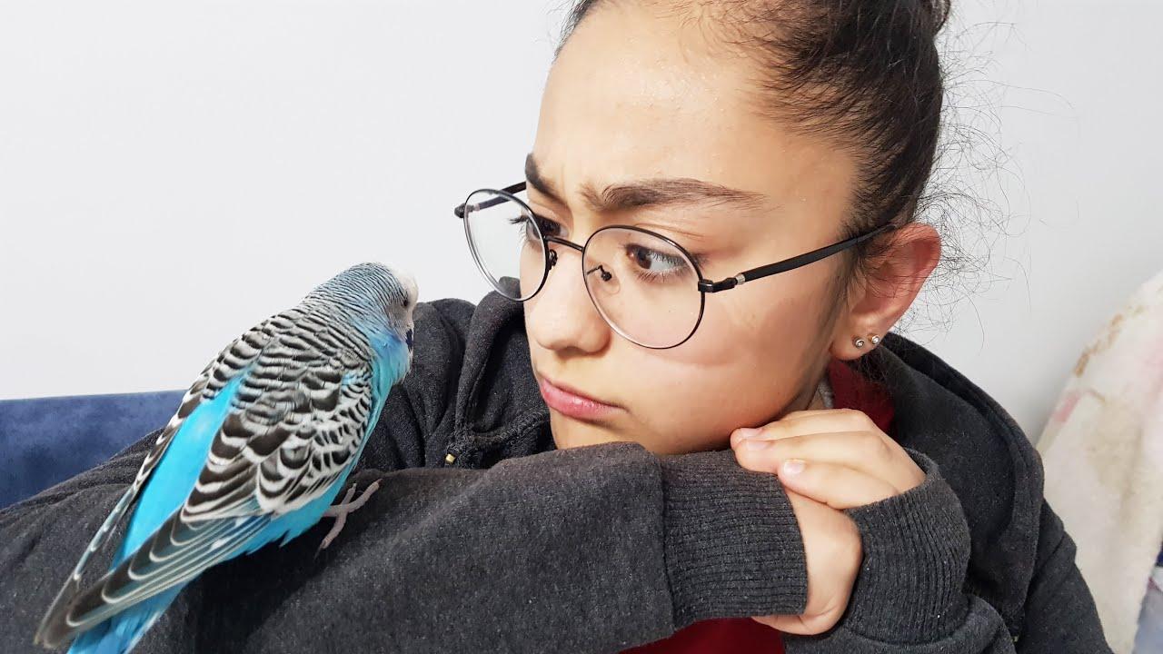 Muhabbet kuşu konuşturma egzersizi - Kuşunuz PAŞA Desin