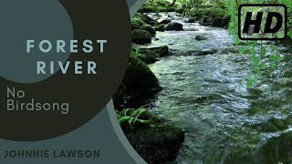 Relaxing Forest Sounds of Nature Soothing Natural Sounds for
